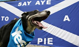 Scottish-independence-dog-011-260x156