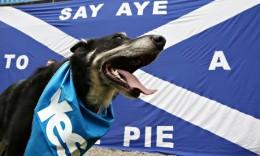 Scottish-independence-dog-011-260x156